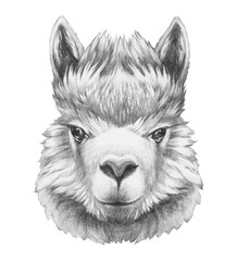 Portrait of Lama. Hand drawn illustration.