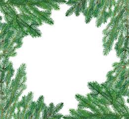 lush blue fir branches frame