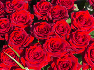 large bouquet of red roses cherry