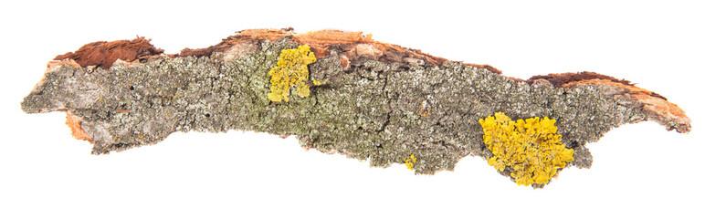 Bark tree isolated on white background