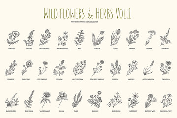 Wild flowers and herbs hand drawn set. Volume 1. Botany. Vintage flowers. Vintage vector illustration.