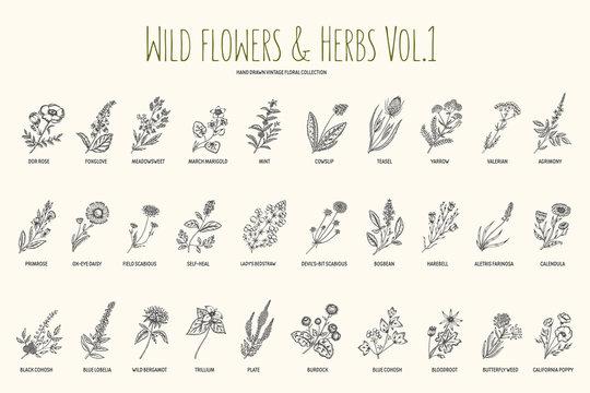 Wild flowers and herbs hand drawn set. Volume 1. Botany. Vintage flowers. Vintage vector illustration.