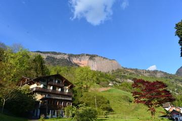 Fächerahorn im Bergdorf in der Zentralschweiz