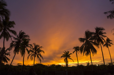 Silhouette of palm tree over beautiful and colorful sunset