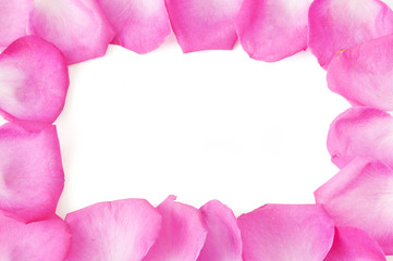 Pink rose petals isolated on white background. Petals frame