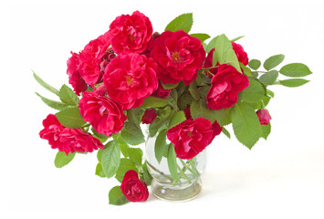 Bunch of red roses in vase isolated on white