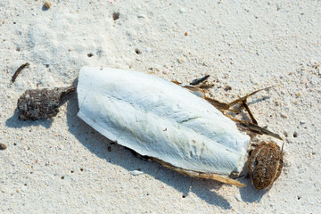 By the time that a cuttlefish dies and decomposes. Its skeleton separates and floats, and is washed ashore an island. This kind of shell contains high calcium, and is valuable to birds and chickens.