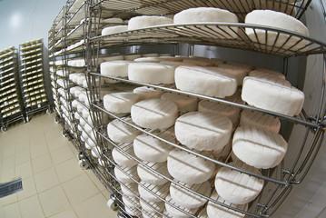 Ripening soft cheese camembert