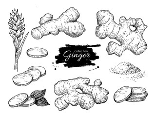 Vector hand drawn Ginger set. Root, ginger pieces and flower.