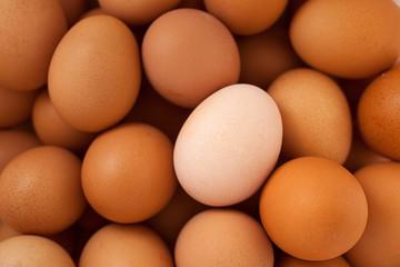 Одно белое куриное яйцо среди коричневых яиц