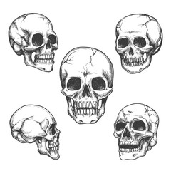 Hand drawn skulls. Skull vector Illustrations set