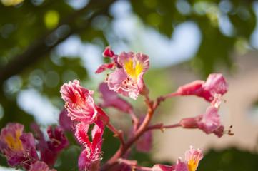 Walpaper Macro fuchsia flower