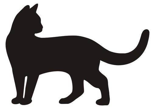 black cat, vector icon, silhouette
