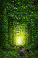 Fantastic Trees - Tunnel of Love with fairy light