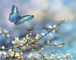Blue butterfly on the background of the spring bloom