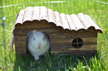 Weißes Zwergkaninchen auf der Wiese im Holzhaus