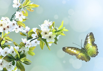 Green butterfly on the background of the spring bloom