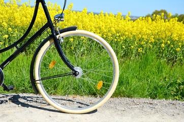 Detailaufnahme eines Fahrrads in der Natur