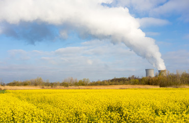Wildflowers Bloom Under Nuclear Power Plant Exhaust Plume