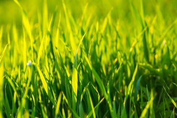 Beautiful green grass background