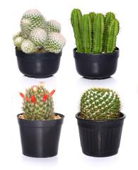set of Cactus isolated on white background