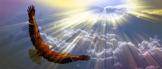 Wall Mural - Eagle in flight above tyhe clouds