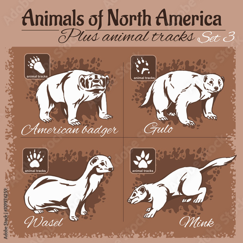 north america animals and animal tracks footprints stock image