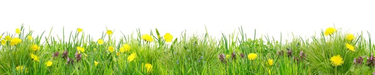 Fototapeta Herrlich schlichte Wildblumenwiese vor Weiß obraz