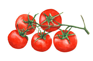 Five watercolor tomatoes on a branch