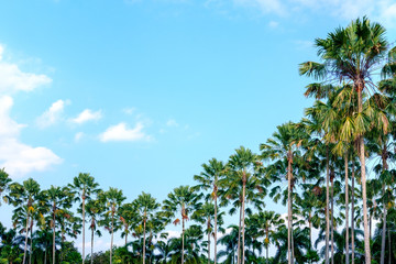 Palm tree on sky background