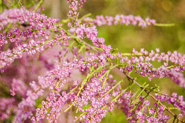Wallpaper small pink Flowers