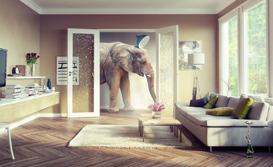 elephant, walking in the apartament rooms.