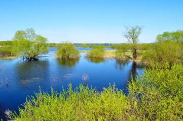 Water spring landscape - backwater of Volkhov river and riparian trees flooded with river water in nice spring weather.