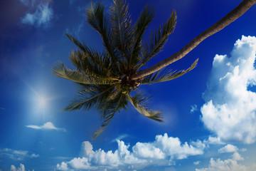 Palm on the blue sky.