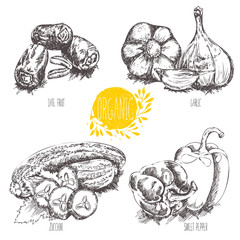 Collection of hand-drawn organic vegetables, fruit, foods. Vector illustration in vintage style.