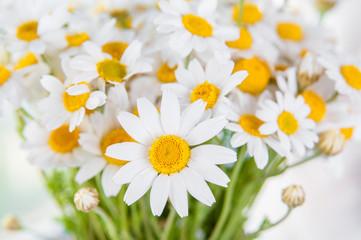 beautiful chamomile daisy flower bouquet