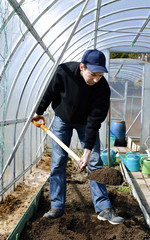 Man in greenhouse digging the soil a shovel on the gardenbed