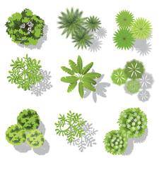 Fototapeta set of treetop symbols, for architectural or landscape design, for map, vector