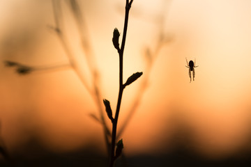 Colorful photo of a spider in sunset