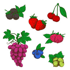 Wild forest and garden fruits colored sketches