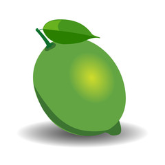 Juicy LIME. VECTOR illustration