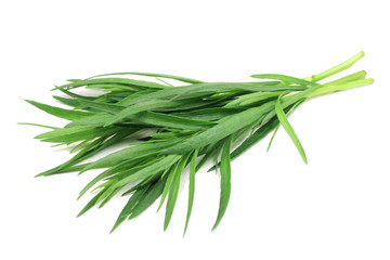 green shoots of tarragon on white background