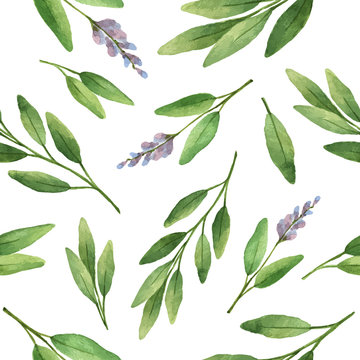 Watercolor vector seamless pattern hand drawn herb sage .