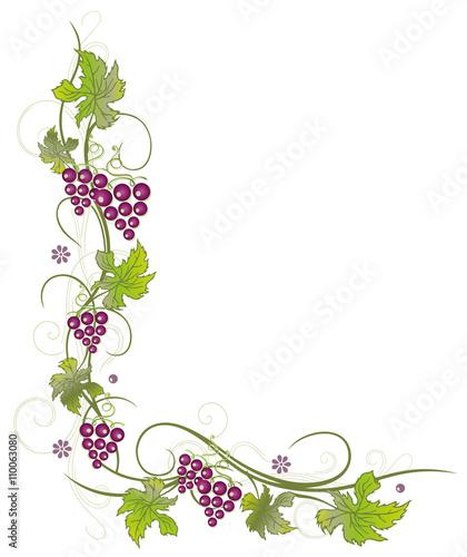 quot weinreben mit weintrauben und bl u00e4ttern quot  stockfotos und clipart grapes to color clip art grapes and vines