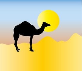 sahara kamel
