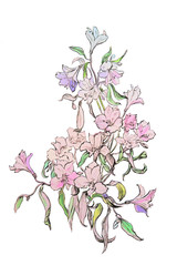 Illustration orchid on white.
