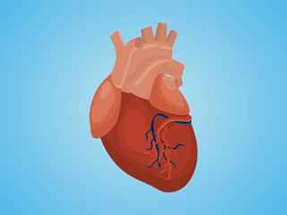 isolated heart with real style vector and blue background