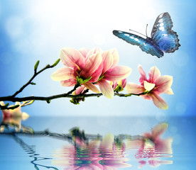 Butterfly and magnolia