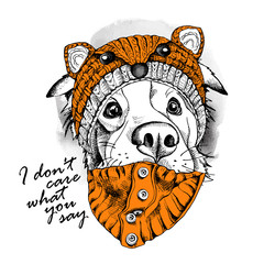 Australian shepherd dog in a fox muzzle hat. Vector illustration.