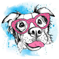 Image Portrait of a dog Australian shepherd wearing the glasses. Vector illustration.